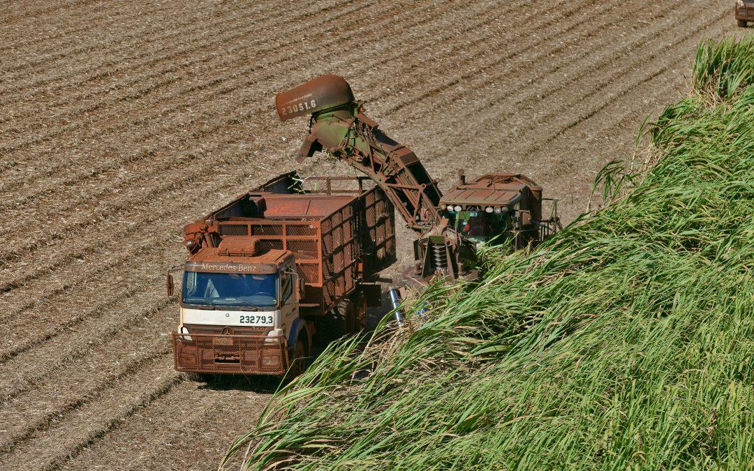 Moagem avança e produção de açúcar diminui na 2ª quinzena de julho